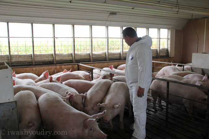 The shocking truths I learned about Pig Farming! All the questions answered in this detailed post!